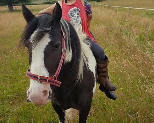 Pony Rides Suffolk Charlie the Pony