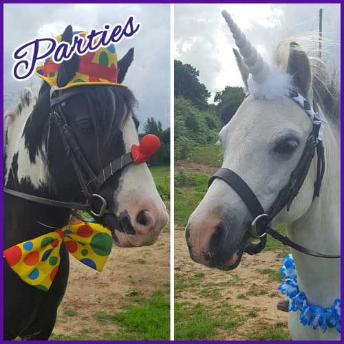 Children's Birthday Pony Parties